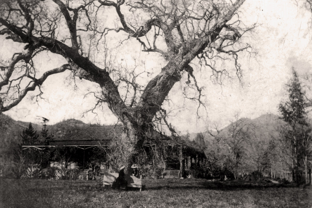 Lillie Hitchcock Coit and guests sit under a large oak tree in front of her home at Larkmead in the late 1800s